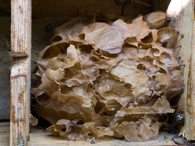 estrutura do ninho