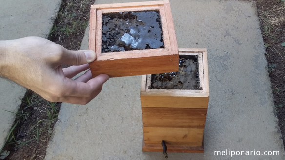 caixa de abelha jataí com mel